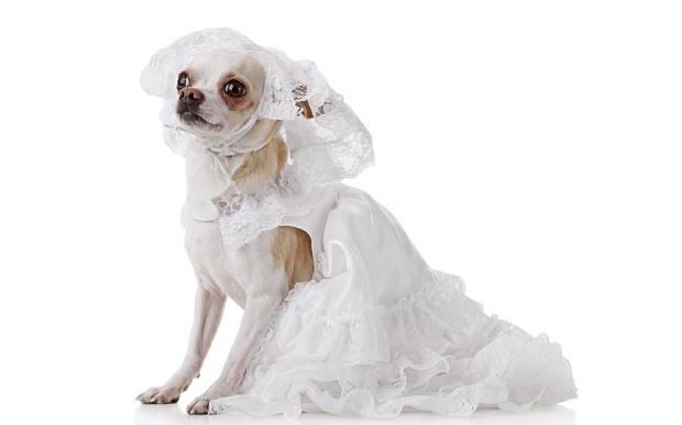 bridal_tutu_Dog_3464848b.jpg