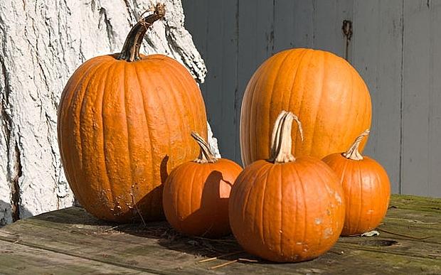 pumpkins_3483530b.jpg